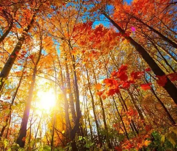 """加拿大枫叶美景:这个秋天想和你去看加拿大的""""枫""""情万图片"""