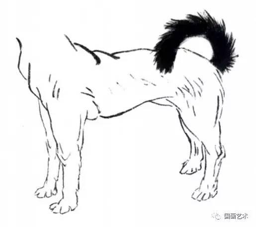 图文教程 怎样画犬