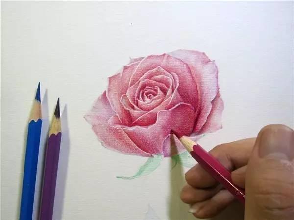 教程  教你用彩铅画一朵玫瑰花!