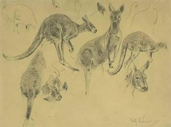 40张惊人的动物铅笔素描画 检验你的基本功是否够火候