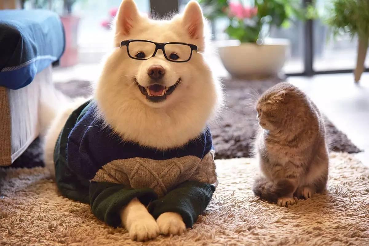 如何判断猫狗是否有狂犬病图片
