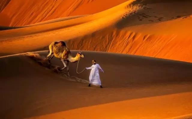 沙漠动物 夜间活动