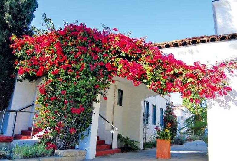 这些超美爬墙植物,随便种1棵,农家小院瞬间高大上!
