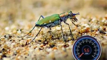 唯快不破,世界上跑得最快的动物
