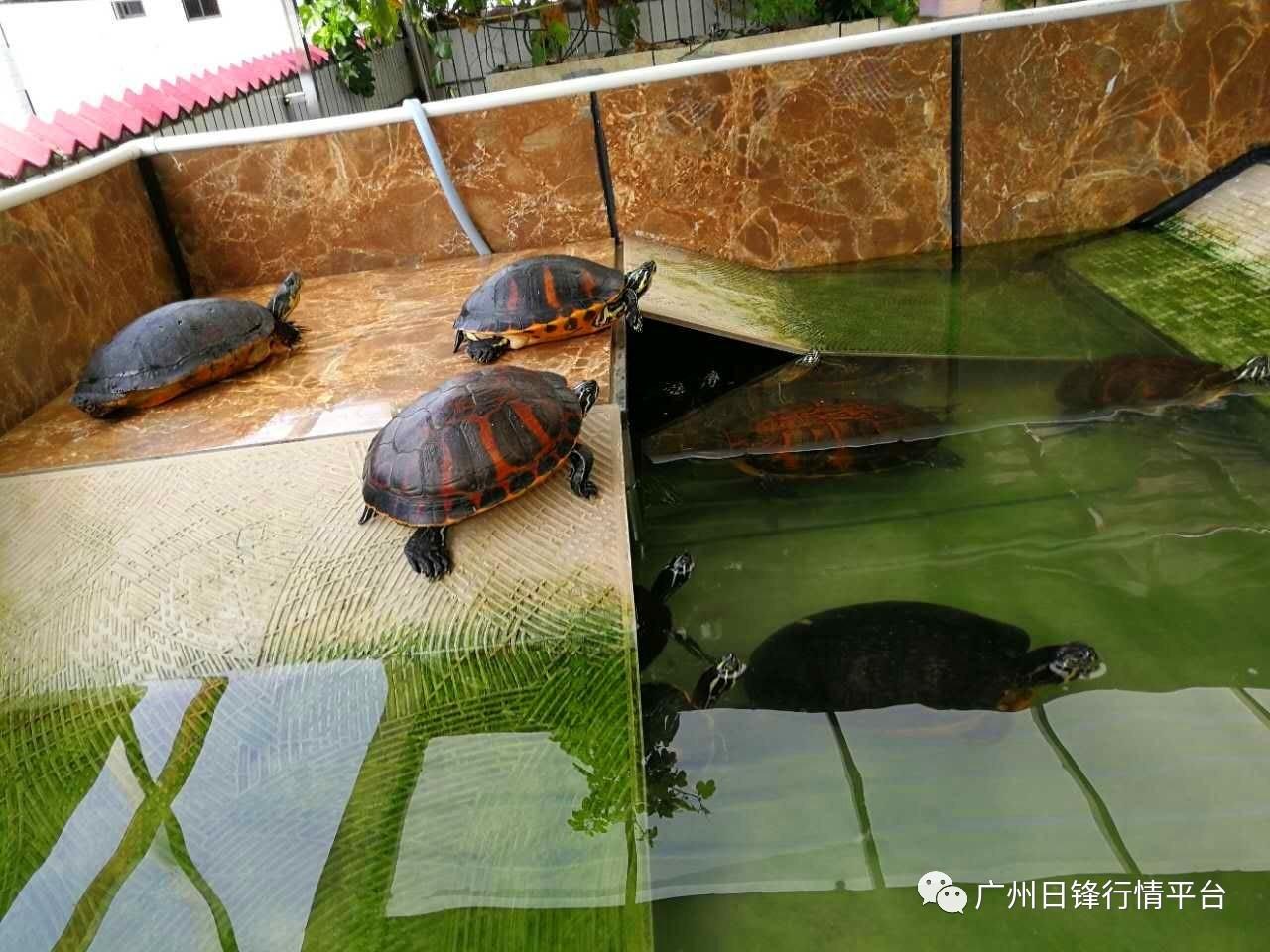 黑板雷锋,养龟注意!v黑板天气高温设计图图片