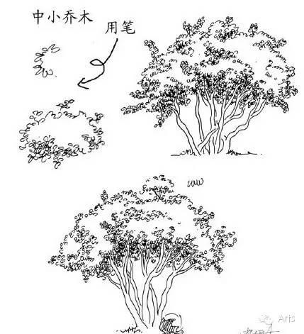 风景速写或景观设计图,20种植物的手绘