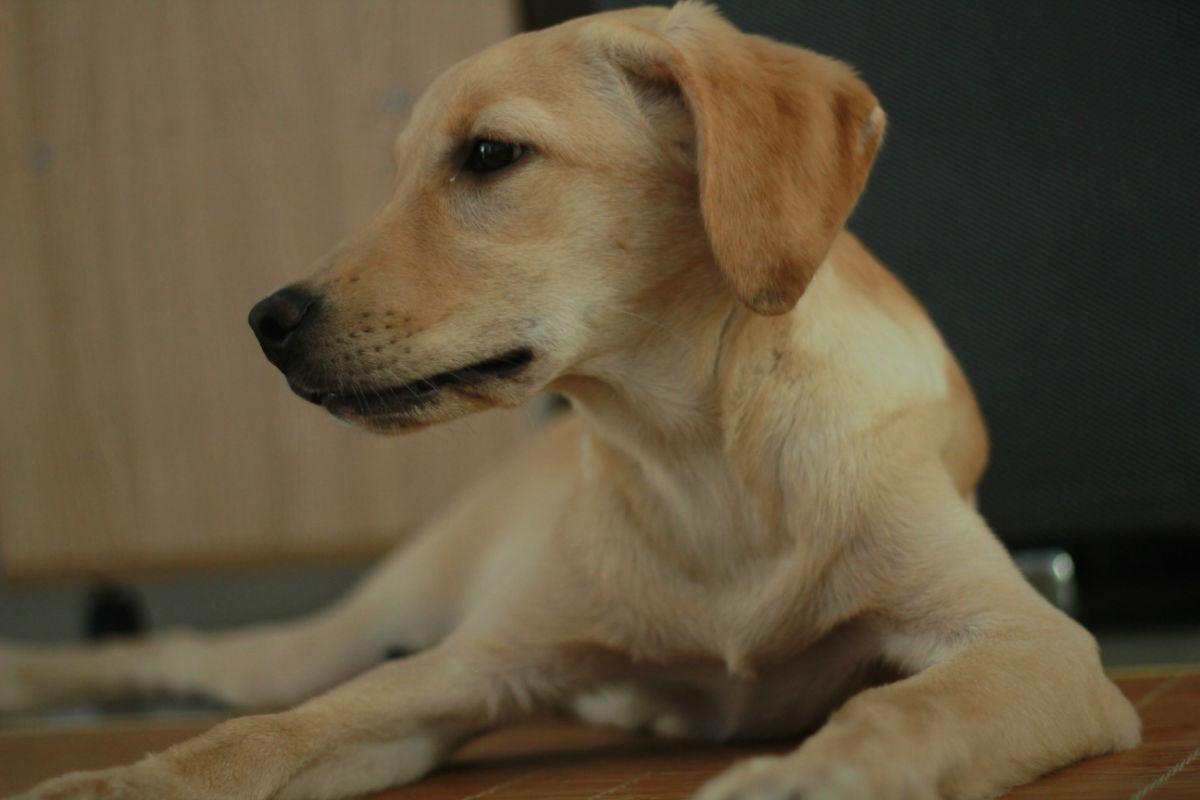 咖巴斯顿天热粮提醒:狗狗在家腹泻如何处理?