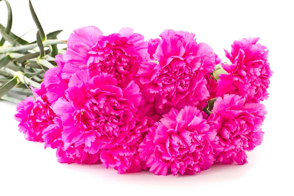 鲜花养护技巧,爱花的你不得不知
