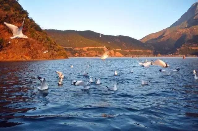 泸沽湖,位于四川省盐源县与云南省宁蒗县交界处,属高原断层溶蚀陷落
