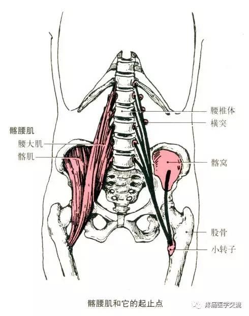 人体解剖全集