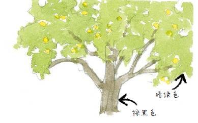 树冠矢量图