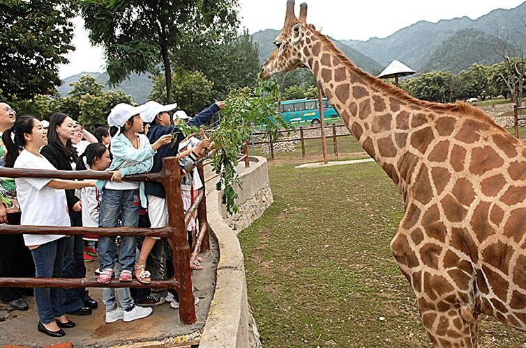 秦岭野生动物园暑期特价