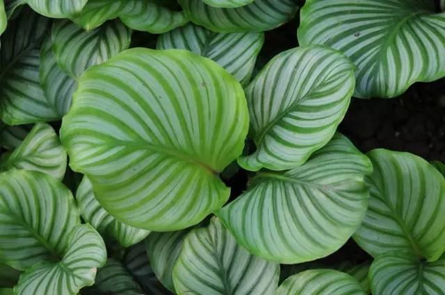 ins网红植物,居然便宜,提升空间逼格必备