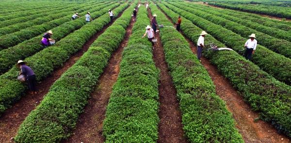 """""""十三五""""现代农业产业技术体系有调整"""