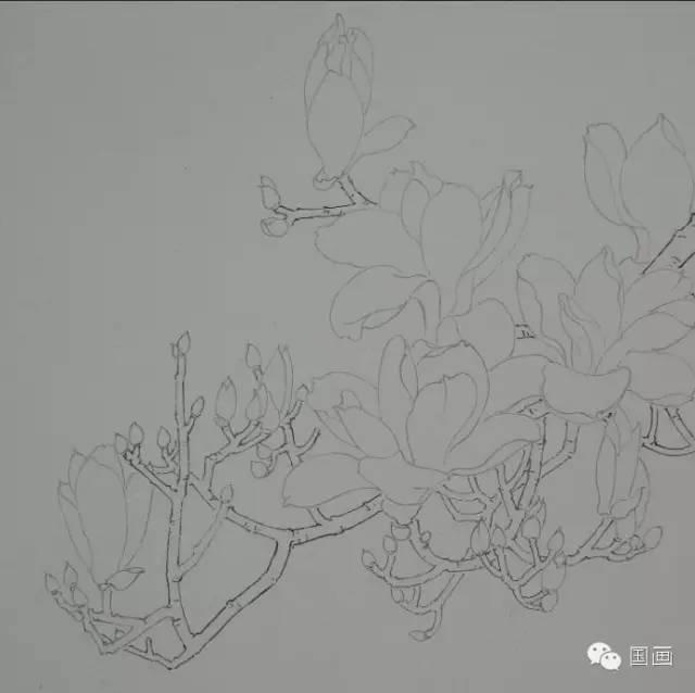 工笔(写意)玉兰花的步骤画法