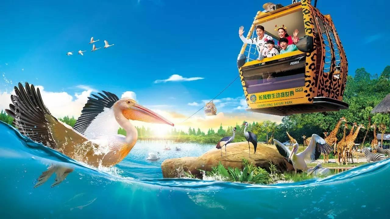 暑假来长隆,免费坐空中缆车看动物, 参加动物音乐节,玩转熊猫乐园
