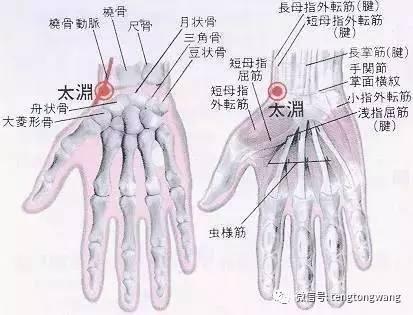 局部解剖:有桡动、静脉.分布着前臂外侧皮神经和桡神经浅支.   所