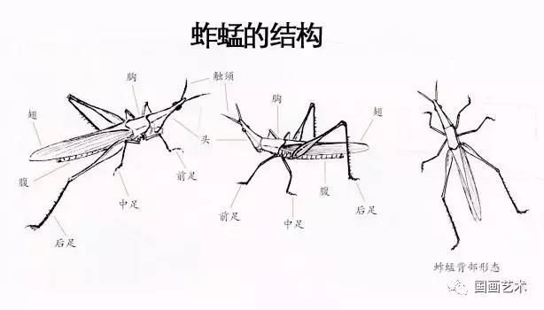 图文教程 写意草虫之蚱蜢 蝗虫 天牛等