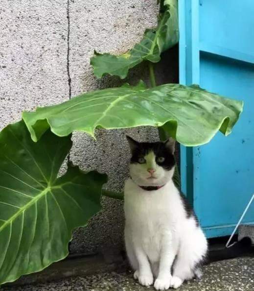 动物躲雨简笔画