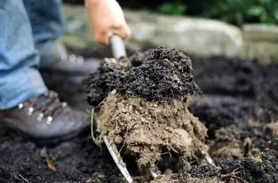 轻泥土手工制作大全动物