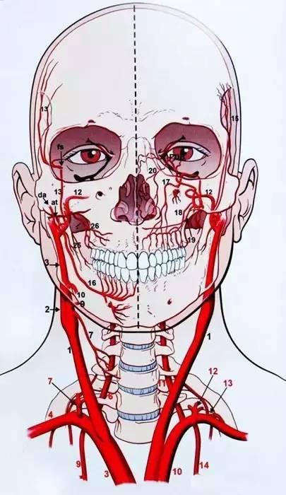 【微整干货】面部注射填充的血管并发症及处理对策图片