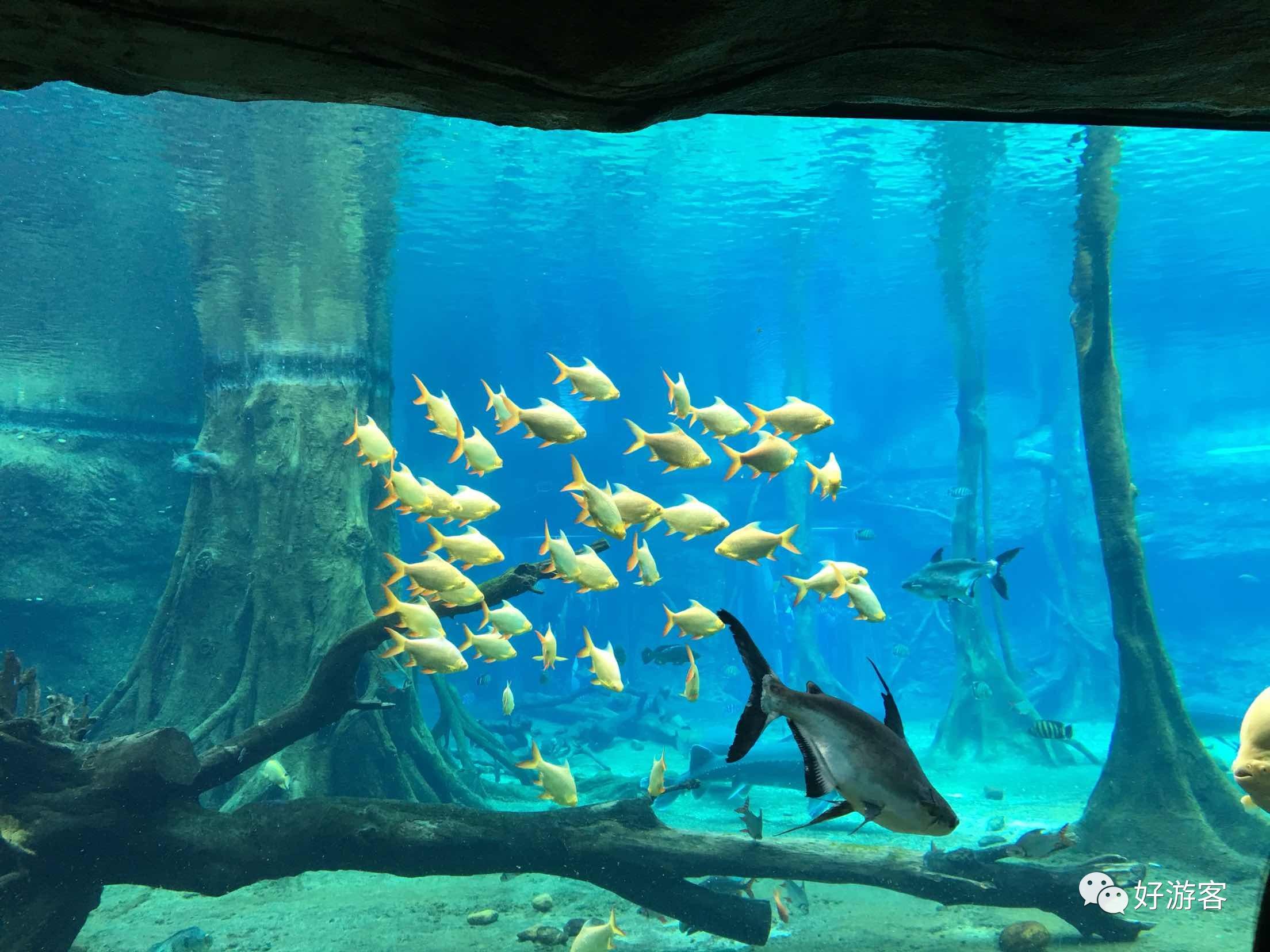 双长隆— 广州野生动物世界,珠海海洋王国,圆明新园三天游