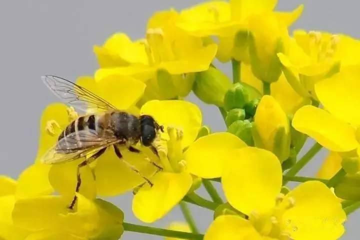 黄色�9��y.��.�_一只只忙碌的小蜜蜂,不放过任意一朵花蕊.