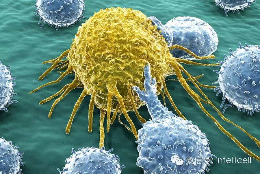 番号种子gif动态图-一张GIF图看懂10种常见癌症,学习如何远离他