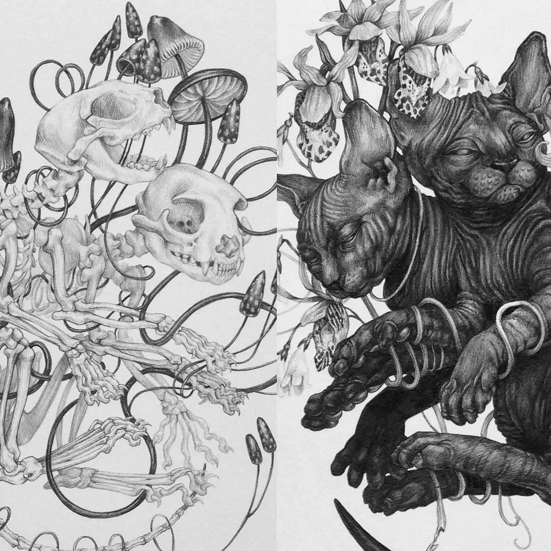 从而得到启发 / 她用铅笔把动物绘制的特别的精细 虽然只画了小范围的
