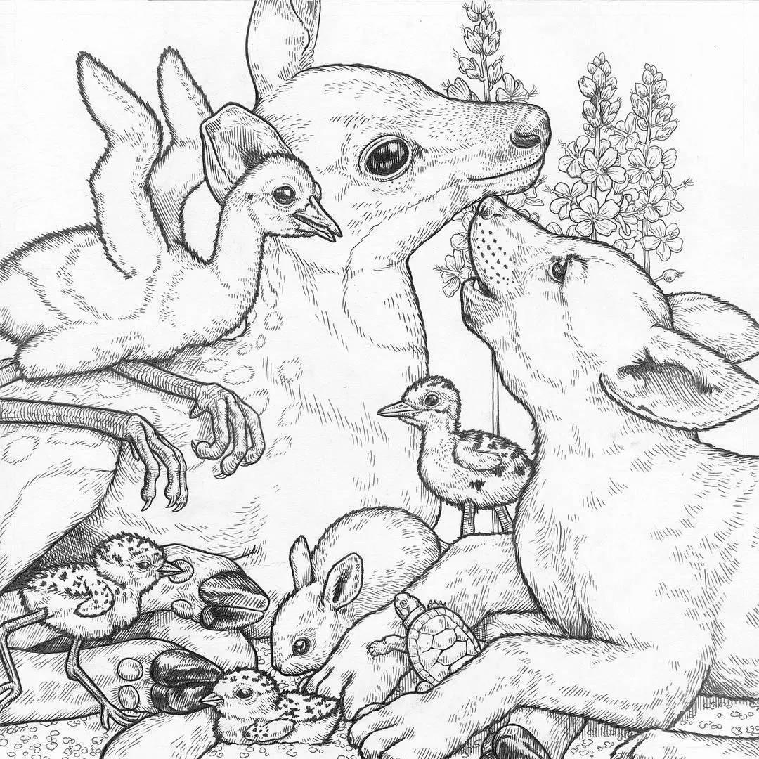正文  她的画大多是用铅笔或者针管笔绘制出来的 / 她画笔下的动物都