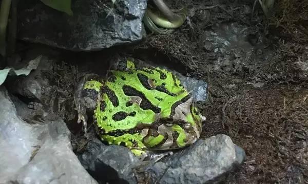 最强动物园丨除了青蛙,你还知道有这些小萌物吗?