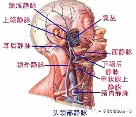 颈部有哪些肌肉 血管和神经