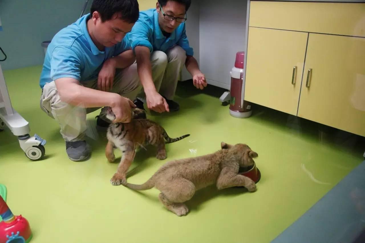 8月19日/26日夜宿北京野生动物园,来一场最野的亲子动物之旅!