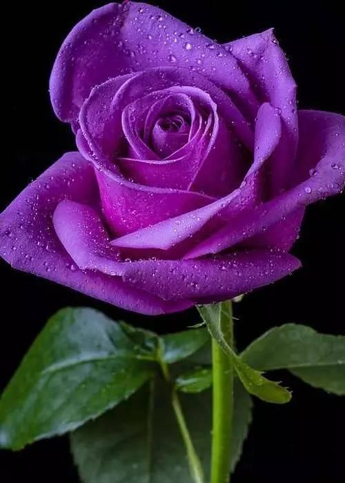 手绘棉花糖紫色壁纸