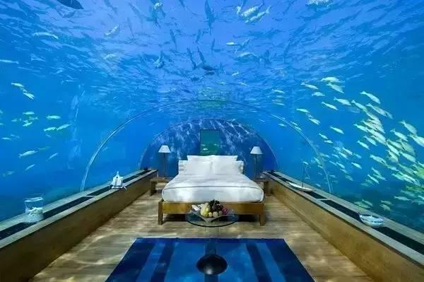 《海底两万里》的即视感,约会千万种海洋生物.