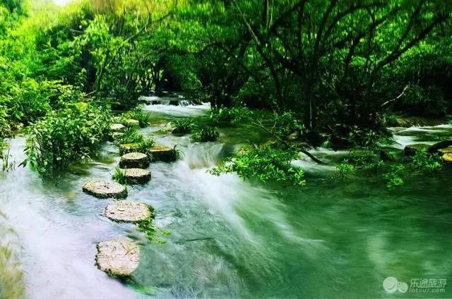 而长不到600米之水上森林,树根盘在错石上,清澈的水流冲刷着青石,行走图片