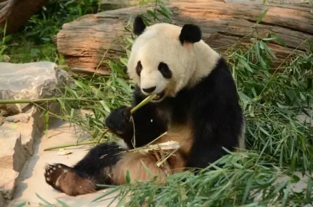 天津方特,大兴野生动物园,北京动物园,古北水镇,白洋淀一日游