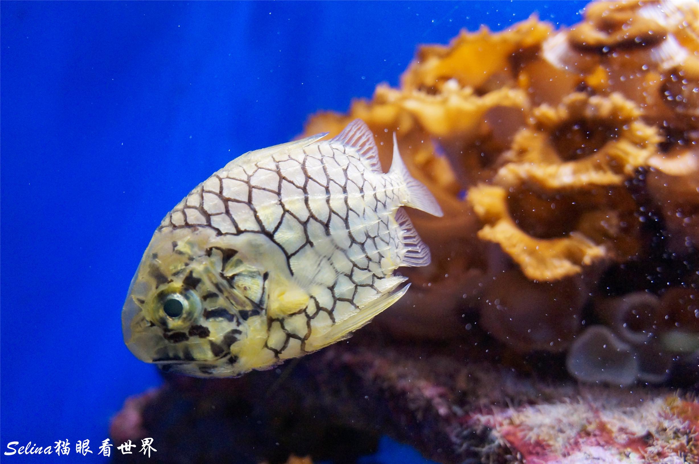 摩纳哥海洋博物馆(上):螃蟹墙上爬,潜艇门前划图片