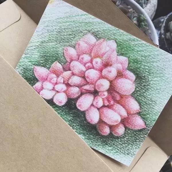 彩铅绘多肉:婴儿手指彩铅手绘教程!