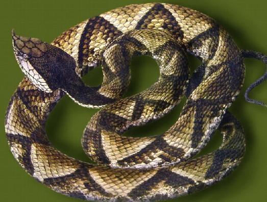 最可爱的宠物蛇