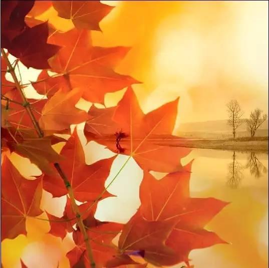 描写秋天的句子唯美 收获的季节