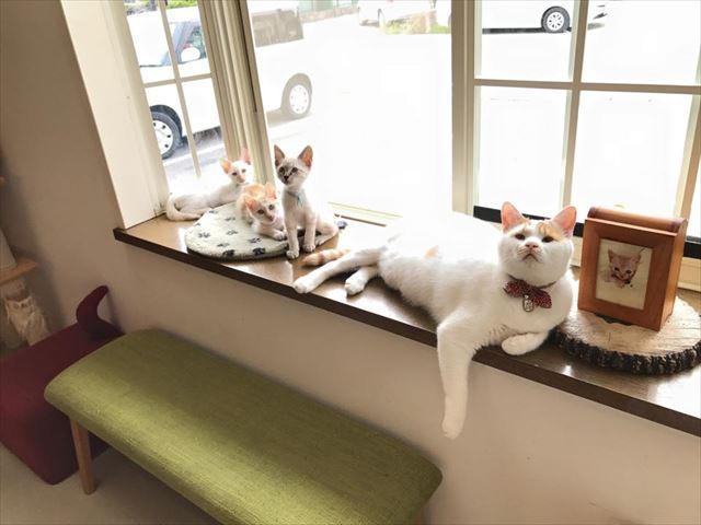 这是日本国内首次尝试在列车中开设猫咪咖啡厅.