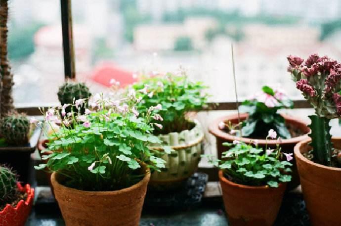 卫生纸也能养花?原来它是养花利器!