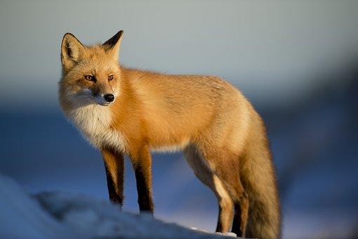 英语单词速记—动物(animals)的单词记忆方法