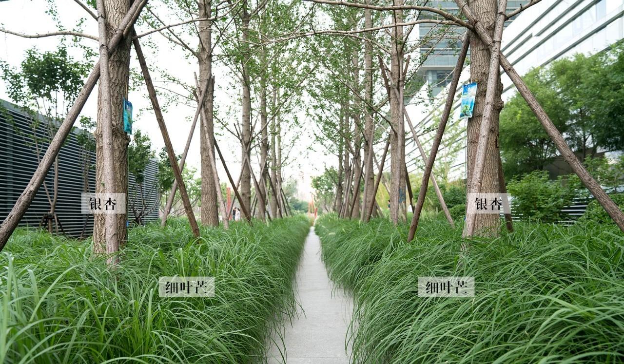 刘强东京东总部茶楼景观设计 易兰v总部设计院高级商城平面设计图图片