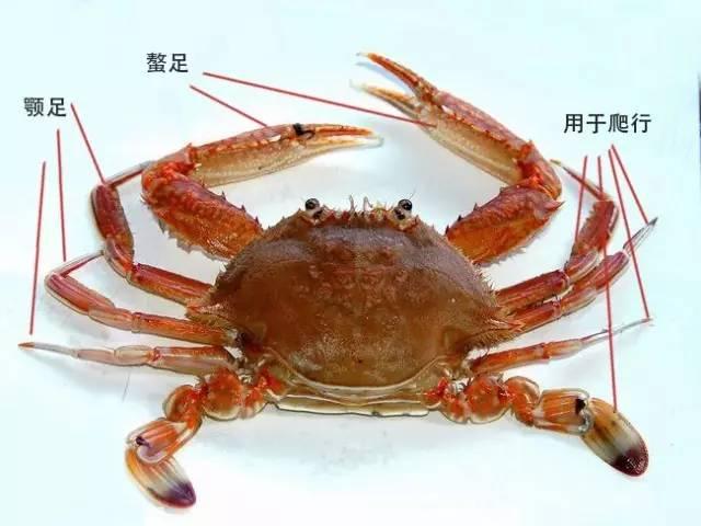 水墨螃蟹矢量图