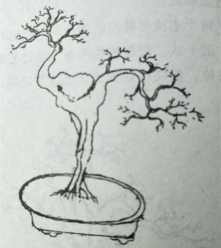 手绘石榴植物黑白