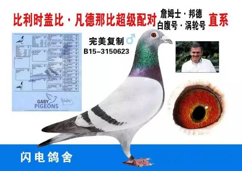 鸽子鸽鸟类动物图示鸟教学800_566恐龙世界奥特曼新图片