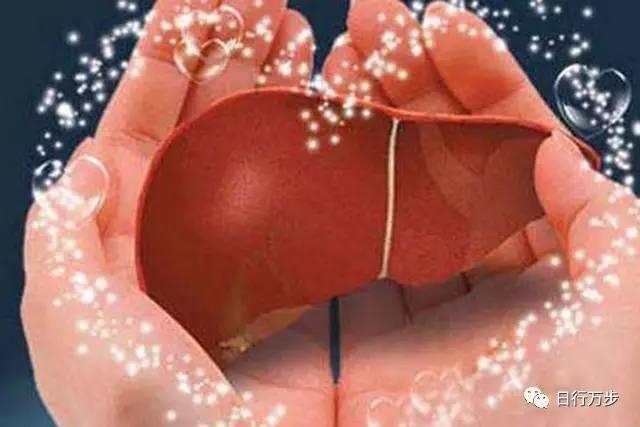 美食 正文  长期患有高血脂症,会导致脂肪肝,使肝动脉粥样硬化,肝小叶图片