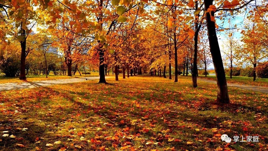 立秋已经4天了,读了这些诗句才算真的迎来秋天